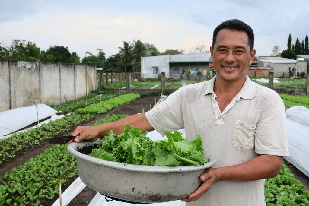 Khi sản xuất rau an toàn, mối quan tâm lớn nhất của ông Phạm Ngọc Hạnh (thôn 1B, xã Trà Tân) và bà con nông dân trong hợp tác xã là đầu ra ổn định.