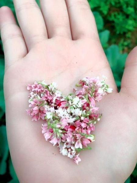 Thuong cho mot mua hoa qua tai - Anh 4
