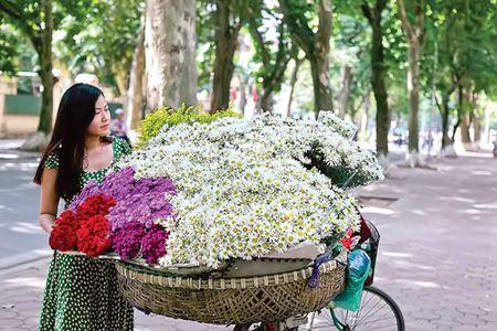 Ha Noi - mua cuc hoa mi - Anh 1