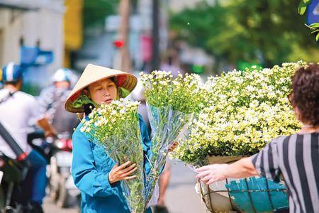 Ha Noi - mua cuc hoa mi - Anh 4