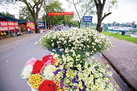 Ha Noi - mua cuc hoa mi - Anh 6