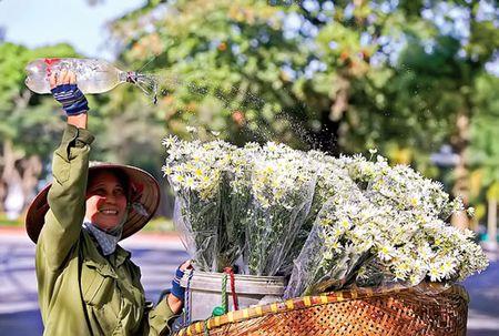 Ha Noi - mua cuc hoa mi - Anh 8
