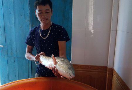 Quang Binh: Ngu dan bat duoc ca su vang quy hiem - Anh 1