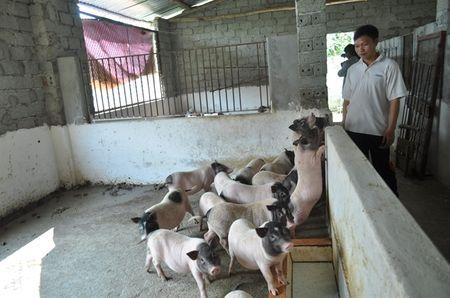 Thuc pham sach, ai lam, ban o dau? - Lon huong Sen Tri - Anh 1
