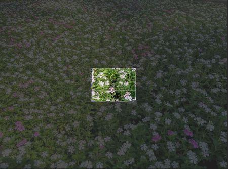 Camera cua Blackberry Priv: Chup thu & Cam nhan anh rat tot nhung xu ly hoi cham - Anh 39