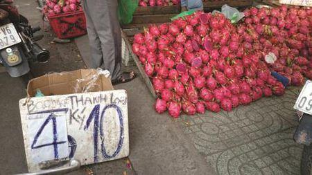Nong san Viet nhung lat cat buon: Tieng chim lon trong vuon thanh long - Anh 1