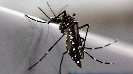 """De xuat triet san muoi duc de ngan virus """"an nao"""" Zika - Anh 1"""