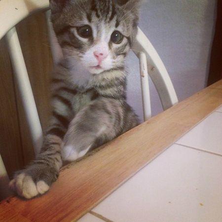 Chu meo 'mat lac' duoc ham mo cuong nhiet tren Instagram - Anh 5