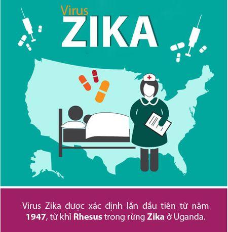 Nhung dieu nguoi Viet phai biet ve virus 'an nao' Zika - Anh 1