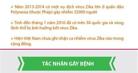 Nhung dieu nguoi Viet phai biet ve virus 'an nao' Zika - Anh 3