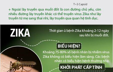 Nhung dieu nguoi Viet phai biet ve virus 'an nao' Zika - Anh 5