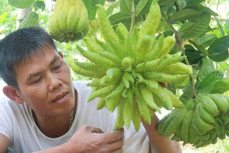 'Toat mo hoi' xem gia nhung trai phat thu dep nhat Tet 2016 - Anh 1