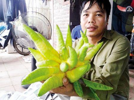 'Toat mo hoi' xem gia nhung trai phat thu dep nhat Tet 2016 - Anh 3