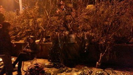 Cho hoa dem Quang An: Ruc ro va nhon nhip ngay giap tet - Anh 5