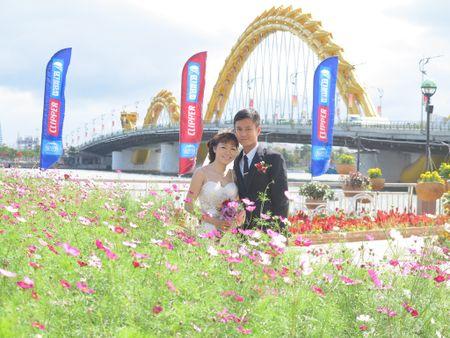 Hoa xuan tran ngap duong pho Da Nang - Anh 4