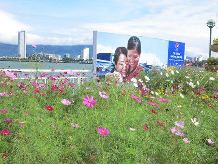 Hoa xuan tran ngap duong pho Da Nang - Anh 5