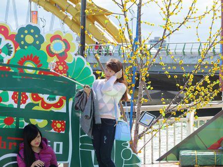 Hoa xuan tran ngap duong pho Da Nang - Anh 6