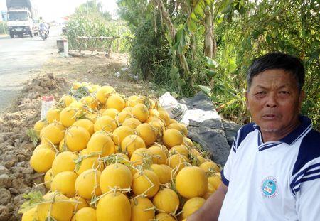 Nong dan Dong Cho Ngap trong dua hau Tet thu lai cao - Anh 1