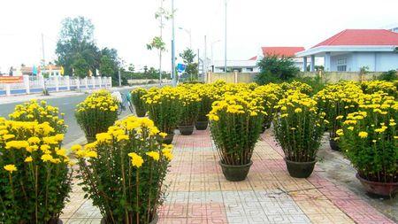 Hoang tan khu ban hoa Tet sang mung 1 - Anh 2