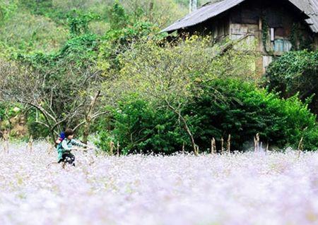 Xuan binh yen tren cao nguyen Moc Chau - Anh 1