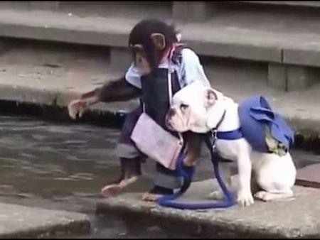 Cuoi ngat xem Khi dat Cho qua song - Anh 1