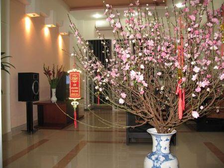Hoa tet va thu choi hoa dao tao nha cua nguoi Ha Noi - Anh 2