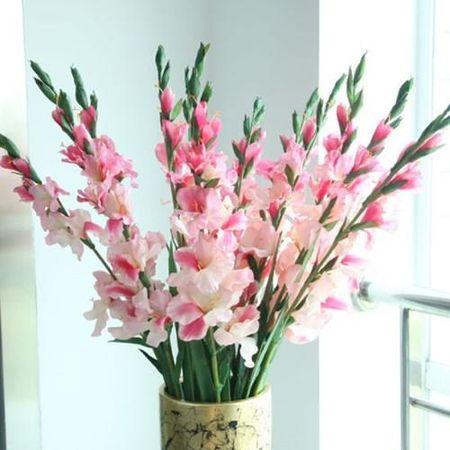 Hoa tet va thu choi hoa dao tao nha cua nguoi Ha Noi - Anh 3