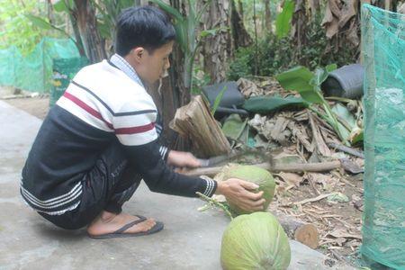 Net Tet rieng duoi chan nui Hon Tau - Anh 7