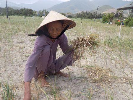 Nguoi trong toi o Khanh Hoa khon don - Anh 1