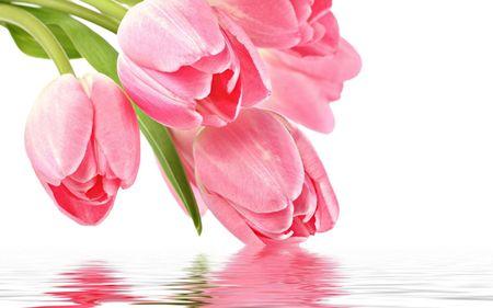 Nhung loai hoa me tuyet doi khong cam trong nha keo hai be - Anh 1