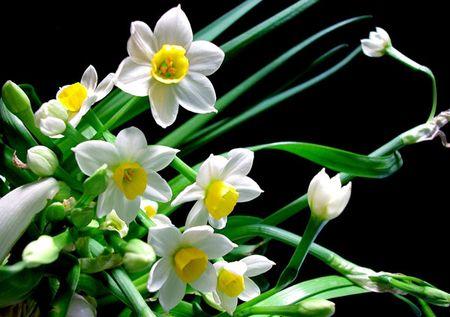 Nhung loai hoa me tuyet doi khong cam trong nha keo hai be - Anh 3