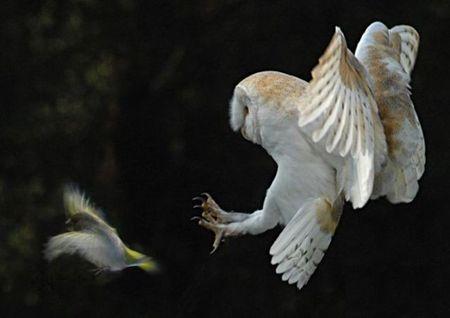 Bi an ve loai chim lon bao hieu cai chet - Anh 10