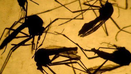 Virus Zika co the gay benh bai liet - Anh 1