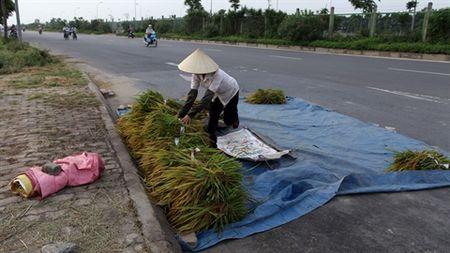 Phoi thoc, lua tren dai lo Thang Long - Anh 1