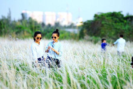 Canh dong co lau dep nhu tranh giua Sai Gon - Anh 7