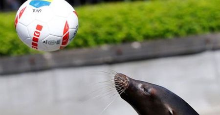 'Tien tri' su tu bien khoi dau suon se tai EURO 2016 - Anh 1