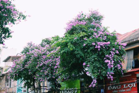 Den Hai Phong mua hoa phuong no - Anh 4