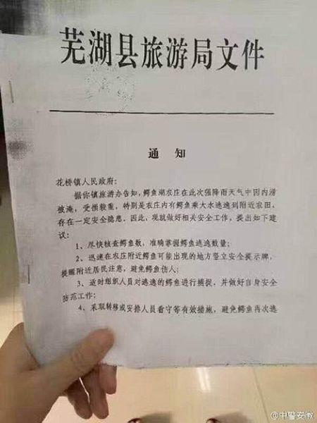 Ngap lut o Trung Quoc, 92 con ca sau 'song chuong' - Anh 2