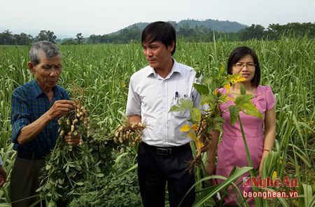 Trong xen dau, lac chong benh choi co cho mia - Anh 2