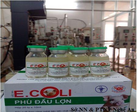 Giai phap cho benh sung phu dau o lon con xuat hien tai Nghe An - Anh 3