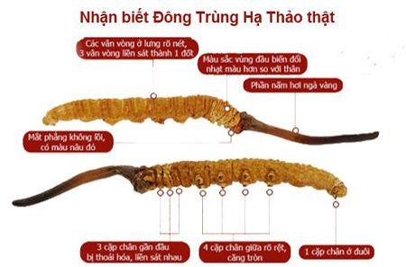Mua dong trung ha thao - khong chu y mua phai hang gia nhu choi - Anh 3