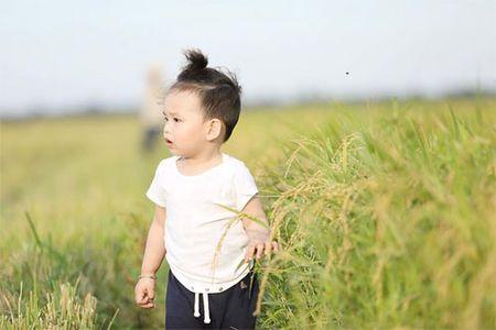 Con trai Diem Huong ngo ngac giua canh dong lua vang - Anh 4