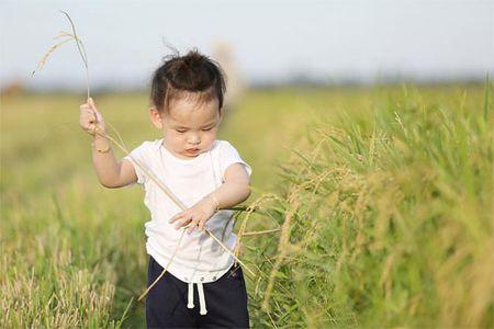 Con trai Diem Huong ngo ngac giua canh dong lua vang - Anh 5