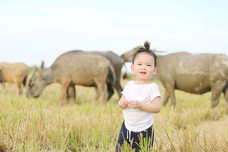 Con trai Diem Huong ngo ngac giua canh dong lua vang - Anh 6