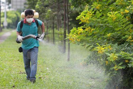 Toan bo nguoi nhiem Zika tai Singapore deu da binh phuc - Anh 1