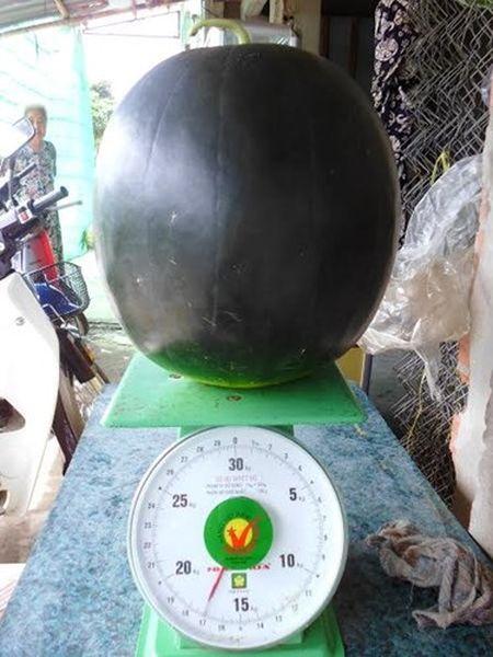 Can canh qua dua hau co trong luong khung 17kg o Bac Lieu - Anh 2