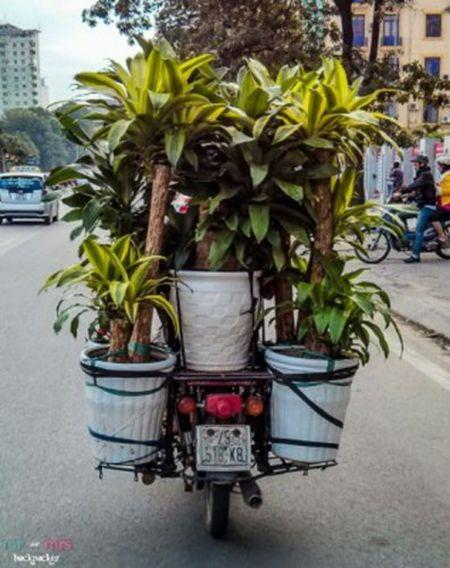 "Kinh ngac ""hang hoa"" duoc van chuyen tren xe may - Anh 4"