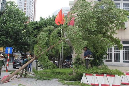 Sau bao, Da Nang co khoang 500 cay nghieng, bat goc - Anh 3