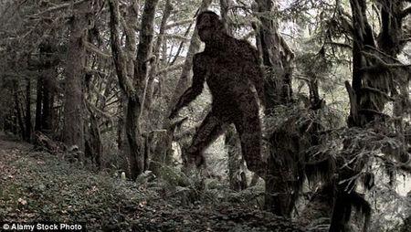 Phat hien quai vat Bigfoot to lon trong rung gay soc? - Anh 1