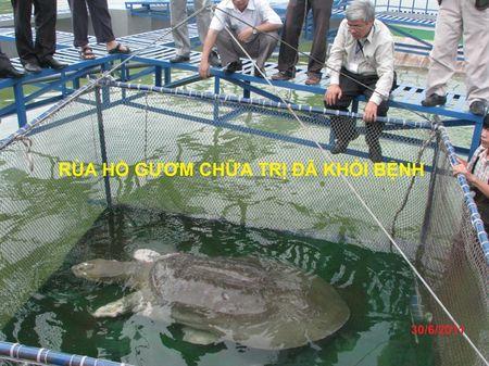 Chuyen chua biet ve hanh trinh hoi phuc tro lai cua 'cu rua' - Anh 3